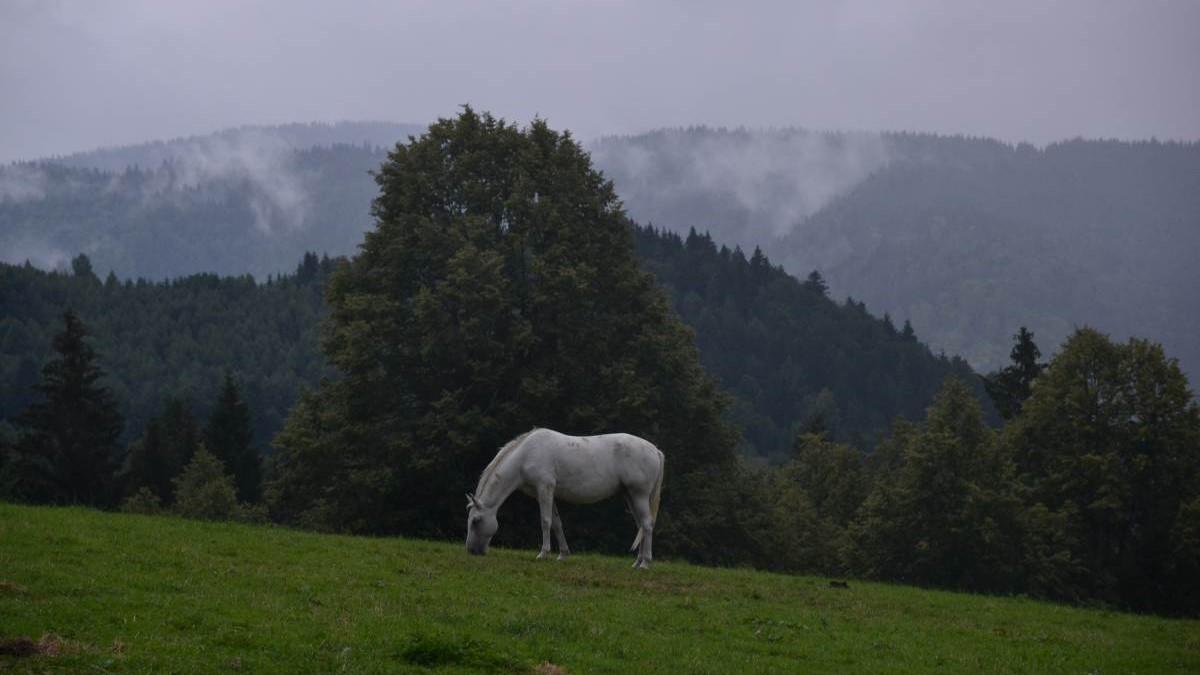 mountain bike slovakia 06